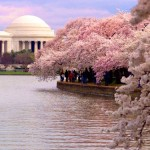 cherry-blossom-festival-washington-dc--150x150